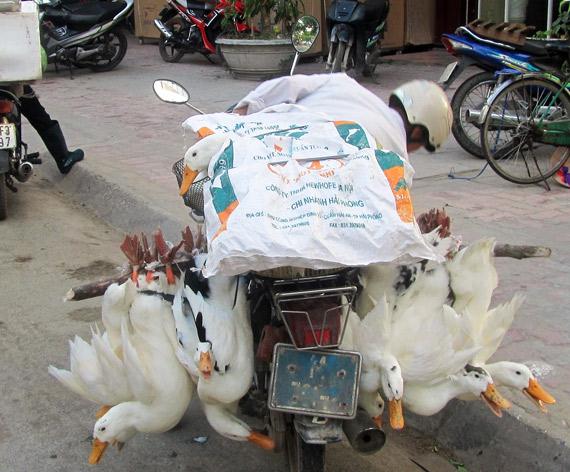 Früh morgens um 5 Uhr auf einem Markt. Da denkt keiner ans Touristen überfallen. Vietnam