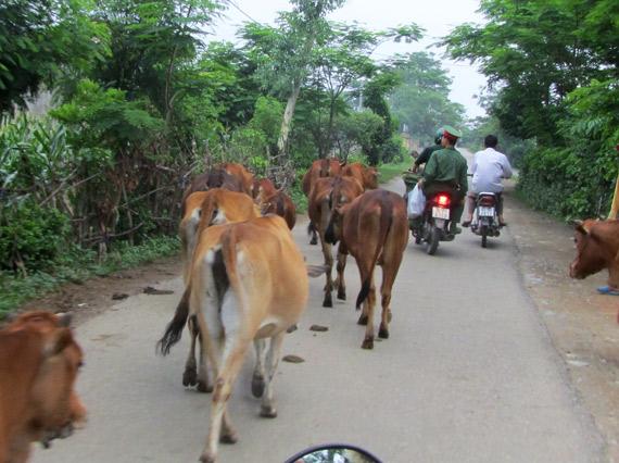 Vietnam mit dem Moped in den Nationalpark gefahren - Danke vietnamesisch Sprachkurs leichter